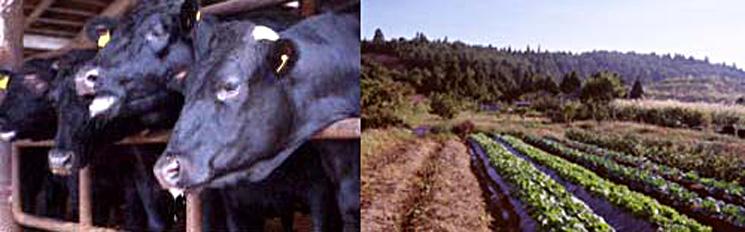 うすい牧場 美味しさの秘密
