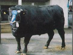 有限会社 臼井濃畜産